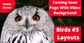 Coming Soon Page Video Birds 3 Layouts on Divi Cake